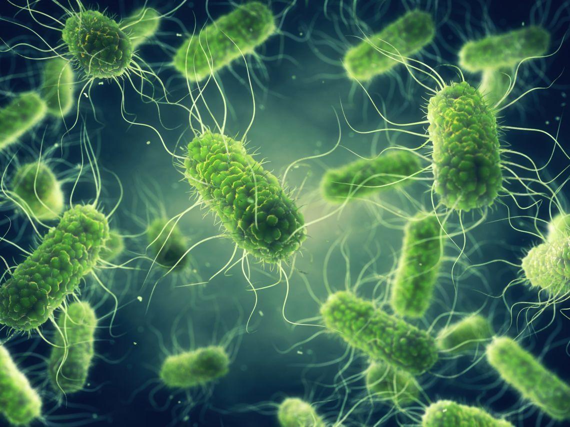biocida microlime